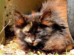 Stray Cat. (~~BC's~~Photographs~~) Tags: bcsphotographs canonsxcamera straycat aroundthefarm kentuckyphotos closeups ourworldinphotosgroup earthwindandfiregroup