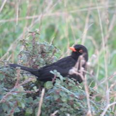 IMG_4971 (jesust793) Tags: pájaros birds naturaleza nature