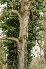 20170104-_IMG0942-Edit (fleetingphotons) Tags: pentaxk1 smcpentaxa200mmf28ed wasingestate fishing warrenbeat kennet trees