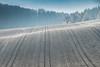 A9900894_s (AndiP66) Tags: altbüron melchnau luzernerhinterland rottal kanton luzern cantonoflucerne bern cantonofberne nebel fog mist gefroren reif frosted frozen hoarfrost sun sonne sunrays sonnenstrahlen hills hügel winter sony sonyalpha 99markii 99ii 99m2 a99ii alpha ilca99m2 slta99ii sigma24105mmf4dghsmart sigma 24105mm f4 amount andreaspeters