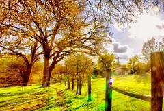 Fall (thefoxyfoxofthewest) Tags: sunrays rayosdelsol bright brillo árboles trees tree árbol corral fence cerca field prado fall rustic rústico nature naturaleza landscape paisaje otoño autumn autumnal otoñal