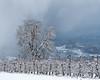 Winterdream (TM Photography Vision) Tags: lörrach badenwürttemberg deutschland basel riehen schweiz sony alpha 99 landscape inzlingen burg röteln