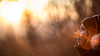 "Sweet flare (""Stròlic Furlàn"" - Davide Gabino) Tags: canonef85f12lii flare sunset sweet bokeh savagebokeh wildbokeh nature intothewild trees branches alberi rami sfocato hair woman donna mouth nose face eyes occhi bocca labbra naso viso lips sunglasses"