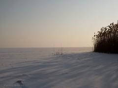 Lake Balaton under snow (andraszambo) Tags: ice eis frozen frost frosty fagy fagyos jég korcsolya snow hó schnee winter balaton lakebalaton plattensee tó lake see iceaged befagyott iceskating skating skate reeds nádas keszthely hungary cold kalt hideg