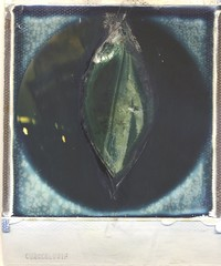 Mutterkorn - KUN (alois_roehrl) Tags: iging esoterik philosophy religion polaroid impossibleproject manipulated instant instantphotography