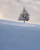 Winter story (CreArtPhoto.ro) Tags: zapada nori brad magura white tree fir clouds snow yellow iarna copac