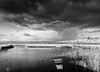 oxford-2-140117 (Snowpetrel Photography) Tags: olympusem1 olympusm1240mmf28 otmoor oxfordshire rspb blackandwhite clouds lakes landscapes monochrome naturereserves pools reeds sky water wetlands oddington england unitedkingdom