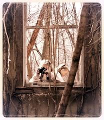 students at work (karma (Karen)) Tags: garrisonforest owingsmills maryland oldbuildings windows walls woods students hww