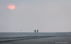 allways the sun (ylemort) Tags: sunset beach zee sea canon canon5dmkiv koksijde beautiful kust belgique belgium color