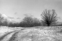 Pomerania, river valley, Early spring 2017 (Other dreams) Tags: vistula river valley orangefilter bw lofi 35mm paranols noise grain nikkor3580