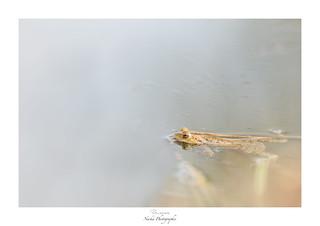 Un brin de nage