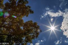 Sun Burst (m_hamad) Tags: park blue summer sky usa sun tree green nature beauty canon outdoors photography virginia photo dc photos farm wildlife explore f16 sunburst chantilly nationalgeographic greatnature naturebeauty supershot 70d ultimateshot dazzlingshot blinkagain instagramapp