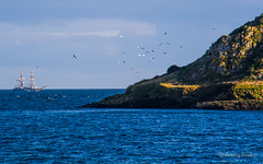 Tall Ship Long Island (JKmedia) Tags: english water canon landscape island boat ship seagull c gulls great tall mast nationaltrust channel rigging seabird waterscape wembury mewstone nosails canoneos7d boultonphotography