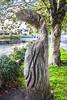 SALMON WEIR AREA GALWAY [RIVER CORRIB] REF--107560