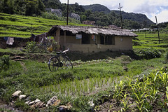 Nepal 2015 25 (fErTaS) Tags: running monks canoneos5d greenricefields fujix100 fertas77 fernandodeotto nepalearthquake