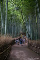 Walking the Bamboo Path (Leprechaun_) Tags: japan kyoto arashiyama