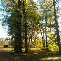 #россия #ленобласть #лисинокорпус #осень2015 #тепло #солнышкогреет #голубоенебо #безоблачно #хорошийдень #природа #тишинаипокой #листва #деревья #краскиосени #люди #безфильтра #russia #sun #nature #niceday #autumn #bluesky #noclouds #leafs #trees #autumnc