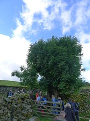 Drovers Ash (thetreehunter) Tags: tree cumbria nationaltrust pollard robmcbride treetrail treehunter watlendath thetreehunter treetourism treehuntercouk