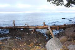 Norway 23 (Detlef Klein) Tags: beach oslo moss gods fjord refsnes