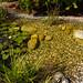 "F Milla blueBase base2 bio Teich Wasserspiel Kies • <a style=""font-size:0.8em;"" href=""http://www.flickr.com/photos/66233167@N05/22344875142/"" target=""_blank"">View on Flickr</a>"