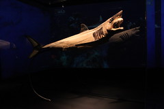 Science World - October 15, 2015 (rieserrano) Tags: shark bodyworlds plastination