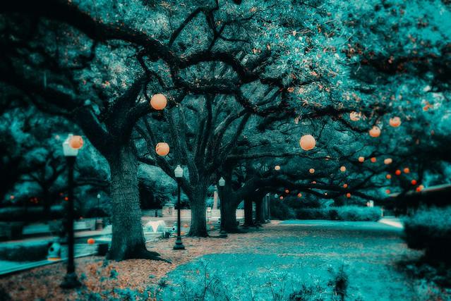 blue orange tree nature landscape nikon explorer oilpaint hallowen d810