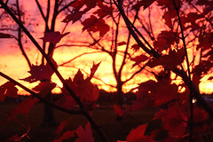 fall is happening (andymudrak) Tags: autumn trees sunset red orange fall leaves outdoors newjersey walk branches nj walkinthepark