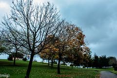 ((mig)) Tags: park parque sky tree gijn cielo rbol xixn pericones