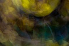 Bltterteppich (christine thormhlen) Tags: laub herbst gelb icm