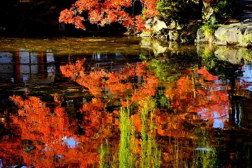 Thumbnail from Maruyama Park