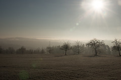 Icy sunrise on the field (Psychograph) Tags: baum tree sonne sun sonnenaufgang sunrise frost morgen morning himmel sky licht light raureif hoarfrost weide field berge mountain täler valley winter eis ice 樋 日头 太阳西沉 霜 昕 远天 光明 شجر شمس شروق الشمس خيل calw