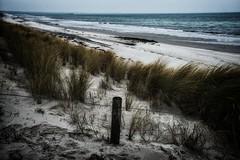 Dune Fence (giselaplewe) Tags: fence zaun ostsee balticsea prerow kste coast