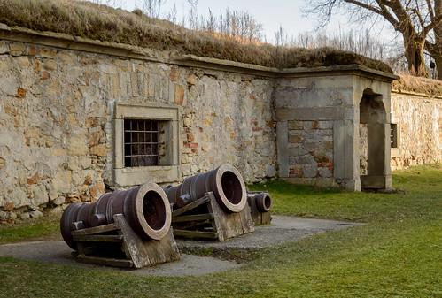 Tiffani's Cannons? ☺