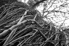 Stickworks Close-Up (melinaparkinson) Tags: art sculpture nature bnw bw trees stickworks sticks