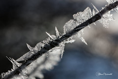 8325   Winter Ostalb (Canonklick) Tags: canon 6d macro 100mm winter eis ostalb