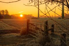 Whats the story morning glory (dretschi) Tags: sonnenaufgang feldmark winter kalt zaun gatter niedersachsen bröckel frost rauhreif morgen hff gras