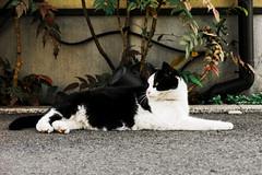 neko-neko1626 (kuro-gin) Tags: cat cats animal japan snap street straycat 猫 canon powershot pro1