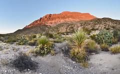 Boquillas Canyon (BongoInc) Tags: bigbendnationalpark chihuahuandesert westtexas cactus desertlandscape boquillascanyon