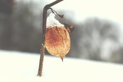 Winter Bokeh (Inka56) Tags: hbw wow winterbeauty