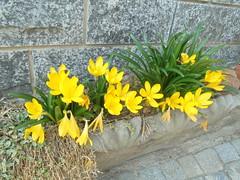 244 (en-ri) Tags: fiorellini giallo verde erba grass sony sonysti