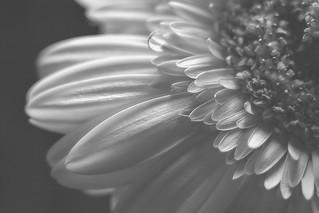 Petals Upon Petals
