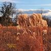 "MAGIC HOUR Landscape (2 of 3) in Late Autumn/Fall at Duke Farms of Hillsborough NJ (takegoro) Tags: ""duke farms"" ""nature preserve"" nature hillsborough ""new jersey"" fall autumn landscape meadow grass native ""magic hour"" ""golden sunset orange"