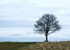 Winter seat (ekaterina alexander) Tags: winter seat cissbury ring south downs national trust tree bench hills ekaterina england alexander sussex landscape sky clouds nature photography pictures