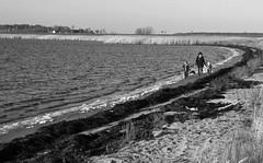 From Bjerred beach in Scania, Sweden / Från stranden norr om Bjärred (larseriksfoto) Tags: beach strand bjerred bjärred sea öresund water utsikt view dmctz70 dmczs50 skåne scania sverige sweden