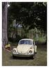 17_02_05_142p (2) (Quito 239) Tags: volkswagen 1971volkswagen 1971volkswagensuperbeetle superbeetleconvertible vw bug vocho escarabajo puertorico haciendaigualdad volky