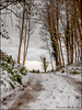 Passeggiata nella neve (Francesca D'Agostino) Tags: neve snow inverno winter colori colors montesantelia calabria fotoamatorigioiesi
