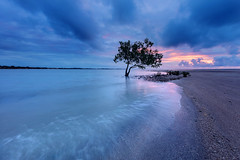 In the dark (Louise Denton) Tags: mangrove east point alone standing lonely solitary dark moody pink purple sunset stormy cloud darwin nt australia beach canon 5dsr