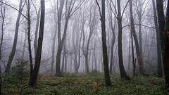 Misty Forest  -  Zauberwald (Werner-Q) Tags: rot