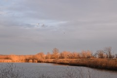 Low Sun (Bill Steffen) Tags: lowsun ccnwr reflection