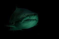 Meereszentrum Fehmarm (noise-fotografie.de) Tags: fish germany deutschland aquarium tiere thringen location thuringia land orte hai region pisces fehmarn schleswigholstein ort fische unterwasserwelt zellamehlis meeresaquarium erlebnispark meereszentrumfehmarn